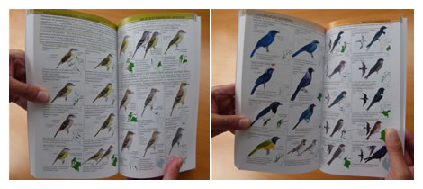 A guide to the birds of colombia by hilty. Steven l. Brown.