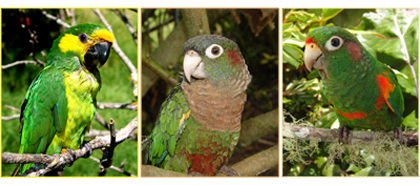 collage_loros_adoptables_copy