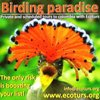 Copy_of_Birding_ad