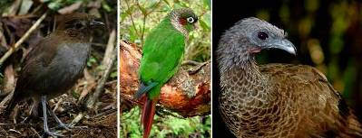 collageAves_2