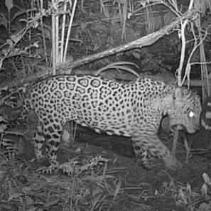Espectaculares registros de la selva amazónica