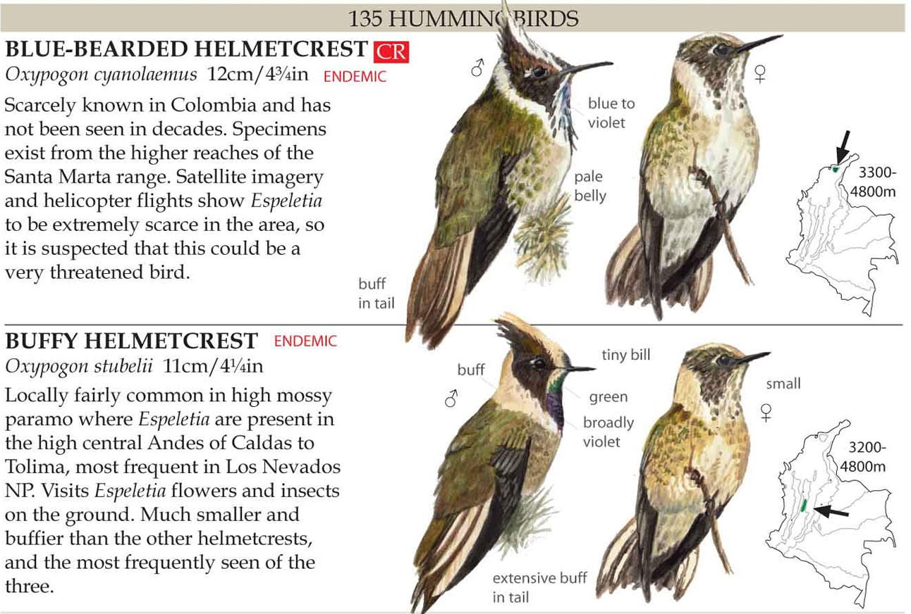 Launch field guide to the birds of colombia in spanish.