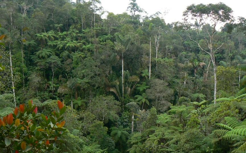 11 Nuevos predios de nuestras reservas hacen parte del SINAP