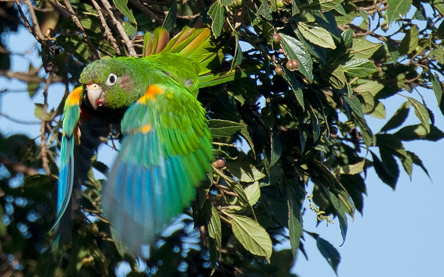 Important Property for Endangered Colombian Bird Protected