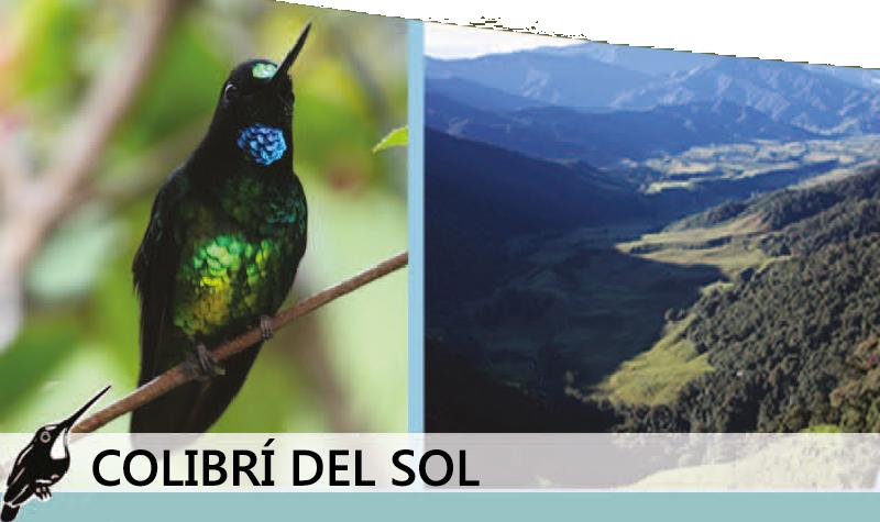 colibri del sol