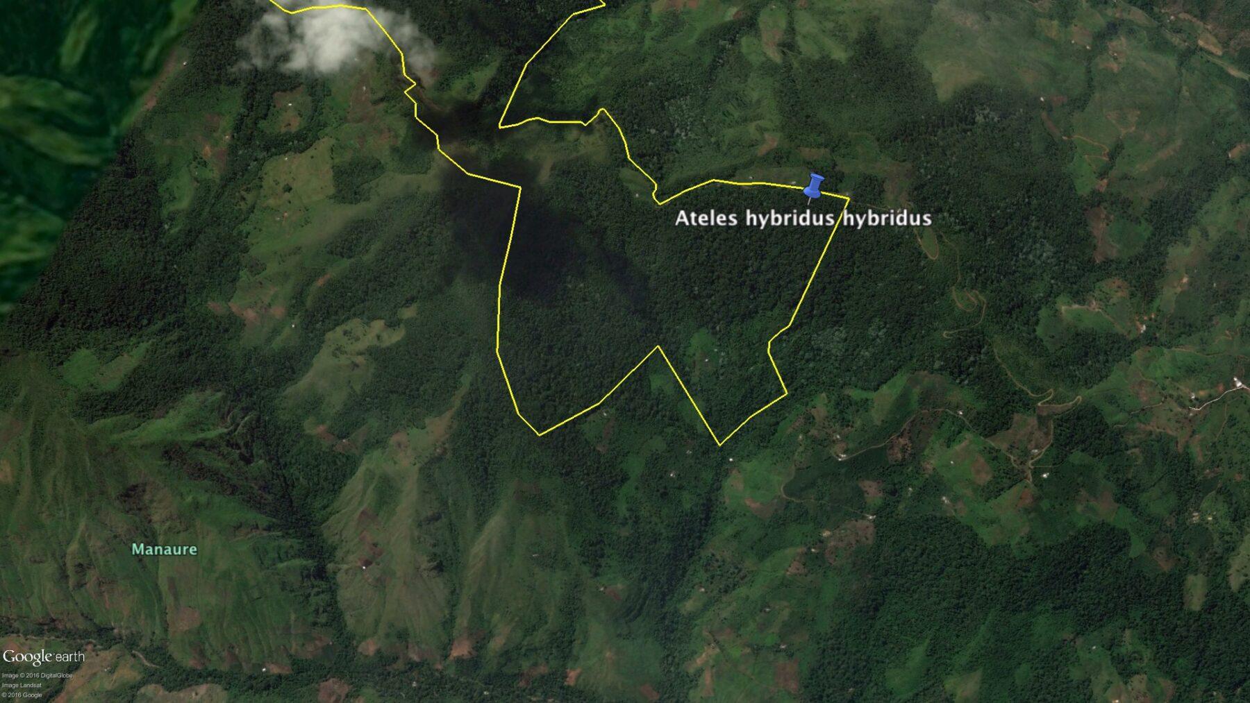 En vídeo: nuevos registros del Mono Araña del Magdalena en la Reserva Natural de las Aves Chamicero del Perijá