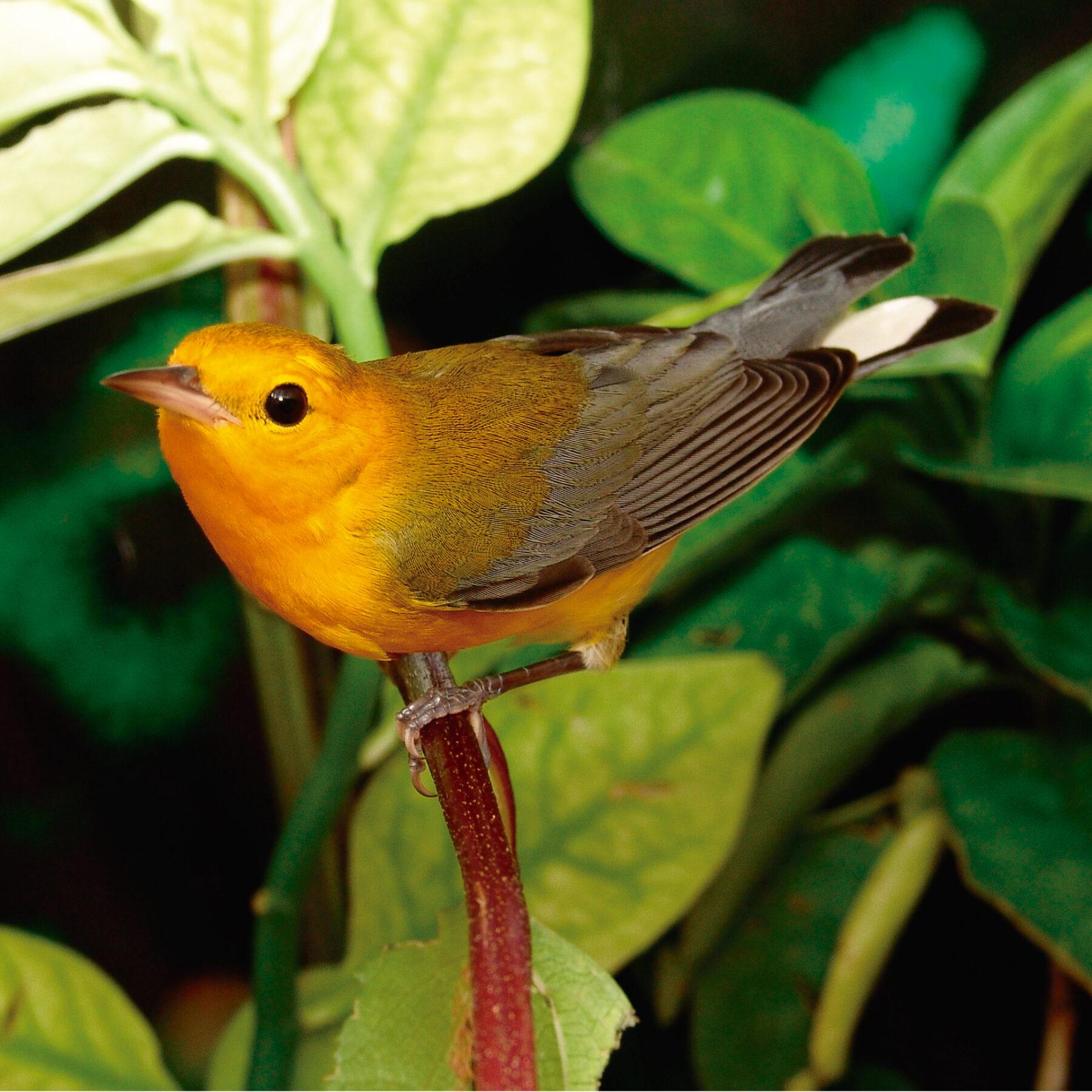 Reservas ProAves: refugios críticos de aves migratorias