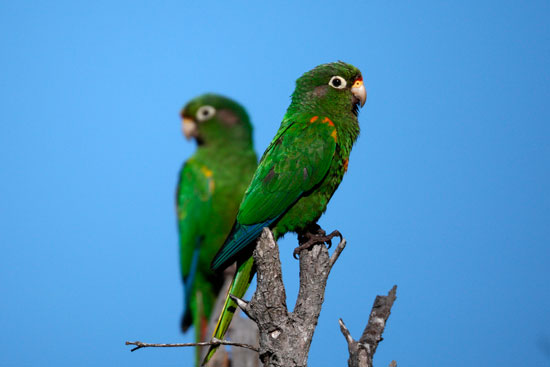 ProAves in the development of bird tourism in Colombia
