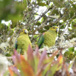 Reserva ProAves, bajo figura de conservación en el  Parque Natural Regional Anaime-Chilí