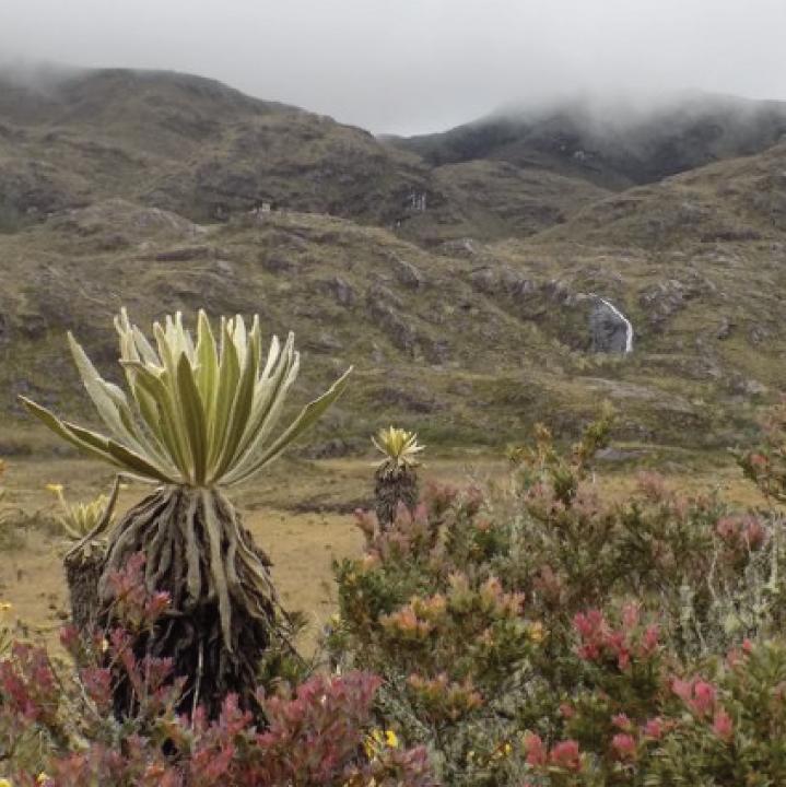 Actos violentos desafían la conservación de las Reservas Naturales