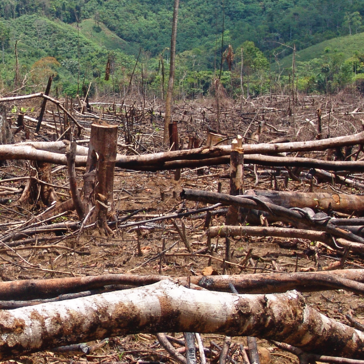 Los bosques colombianos están desapareciendo