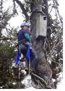 Investigadora Verónica Díaz durante el mantenimiento del nido